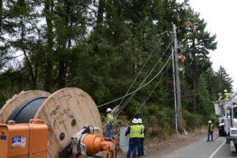 linemen working on poles near trees