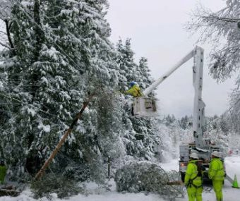 linemen working in the snow next to trees