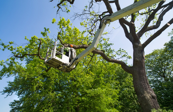 lineworker pruning tree